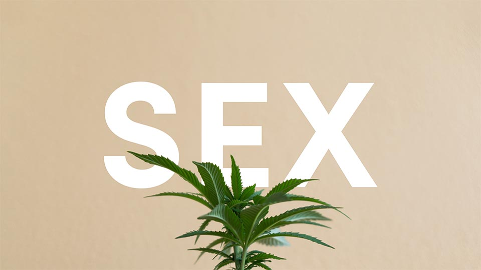 Flowertown Can cannabis improve our sex lives