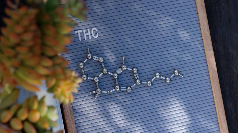 Flowertown What are cannabinoids